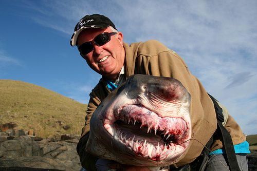 200lb Ragged Toothed Shark